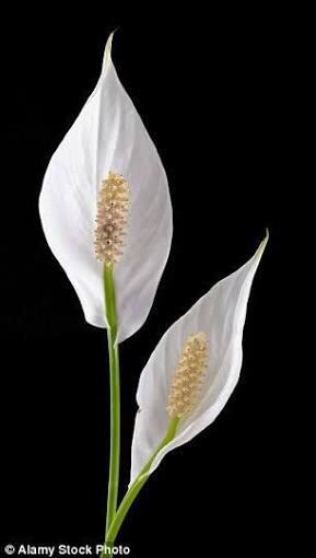 Blossom: